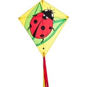 Drak Eddy Ladybug